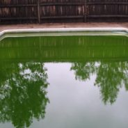 Clearing Up a Green Pool